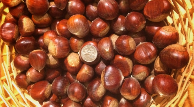 Fall chestnuts