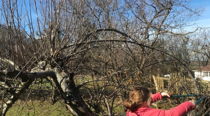 Pruning the trees